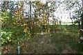 NS5972 : View through a stripwood by Richard Webb