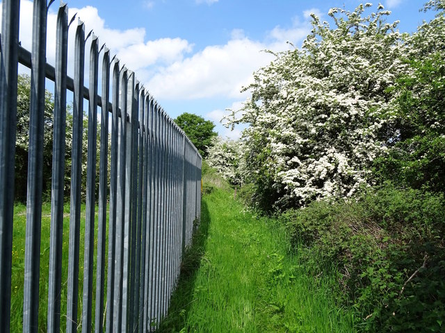 Fence and May blossom by Coleorton Brook