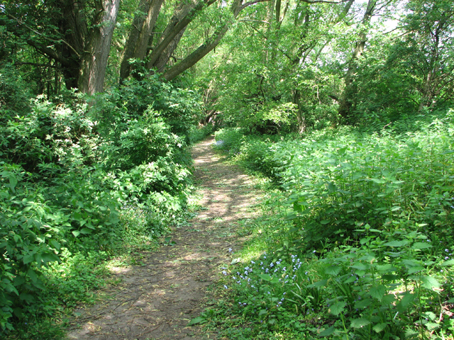 Path from Warren Hills to Beccles Road, Loddon