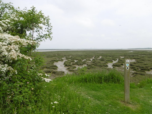 The saltings at Riverside Country Park