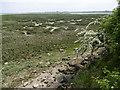 TQ8168 : Salt marsh at Riverside Country Park by Marathon