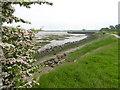 TQ8167 : The Saxon Shore Way on its way to Motney Hill by Marathon