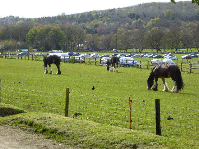 Heavy horses by the carpark of the Wealden Downland Museum