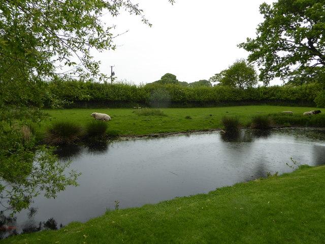 Sheep graze beyond the maot at Little Moreton Hall
