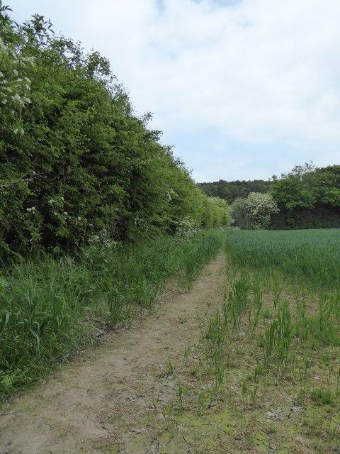 Path along edge of barley field