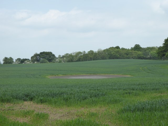 Dried-out pond in barley field