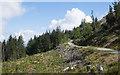 NN0464 : Clear-felled plantation area alongside forest road by Trevor Littlewood
