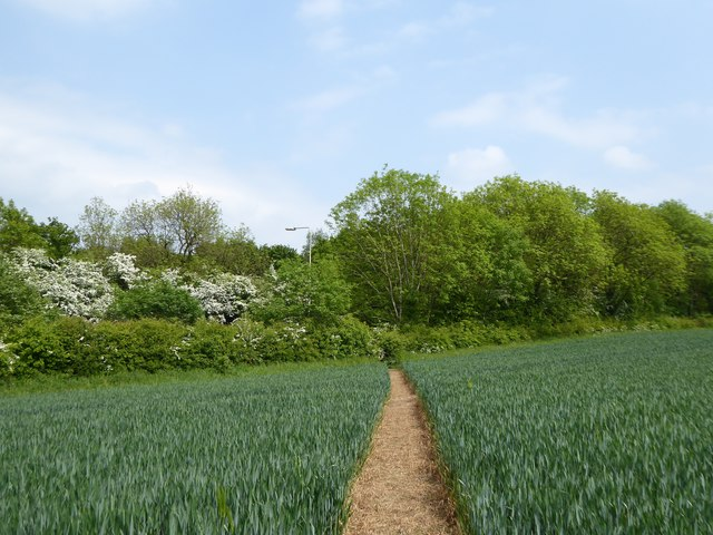 Footpath across barley field reaches road