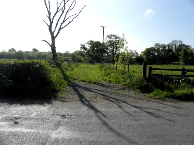 Tree and shadow, Dunbiggan