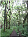 SN0635 : Woodland path into the Gwaun Valley by Gareth James