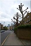 TQ3680 : Along Narrow Street by DS Pugh