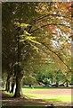 SX9164 : Copper beeches, Upton Park, Torquay by Derek Harper