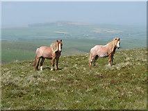 SN0631 : Horses on Foel Eryr by Gareth James