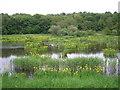 SE2336 : Rodley Nature Reserve by John Illingworth