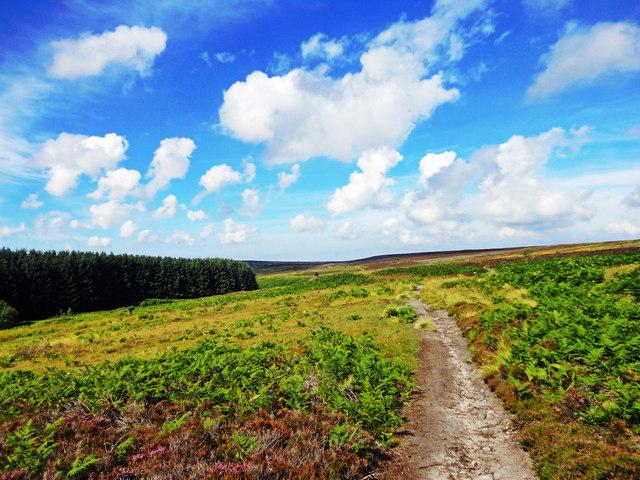 Robin Hood's Bay Path ( Road )