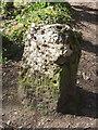 SJ1963 : Mold boundary stone in Coed Pwll-y-blawdd by John S Turner