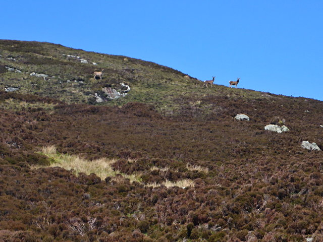 Deer on Beinn Sgalabhat