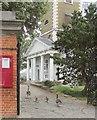 TQ2676 : Geese, Battersea by Derek Harper