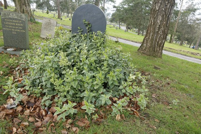 Scrub by the Headstone