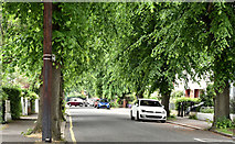 J3774 : Summer trees, Ballyhackamore, Belfast (June 2016) by Albert Bridge