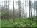 NZ0255 : Woodland near Minsteracres by JThomas
