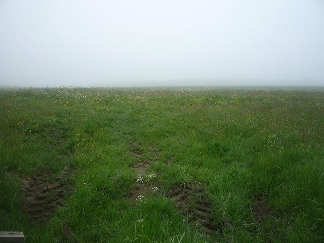 Grazing near Barleyhill