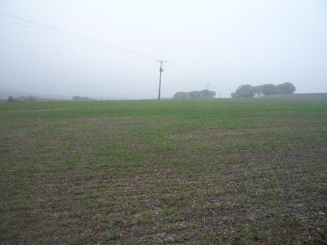 Young crop field near Kiln Pit Hill