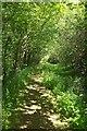 SS3009 : Path beside Bude Aqueduct by Derek Harper