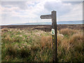 SD9521 : Pennine Way Signpost, Longfield Common by David Dixon