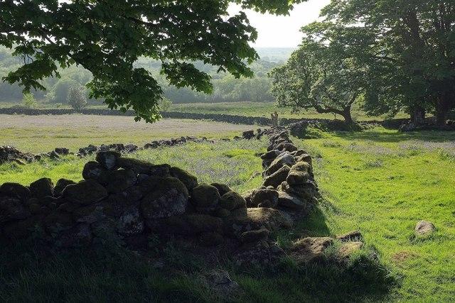 Walls at Emsworthy