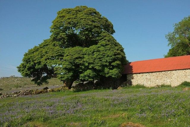 Tree and barn, Emsworthy