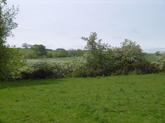 Field beside the Wansbeck