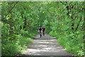 SH6918 : The Mawddach Trail approaching Penmaenpool by Jeff Buck