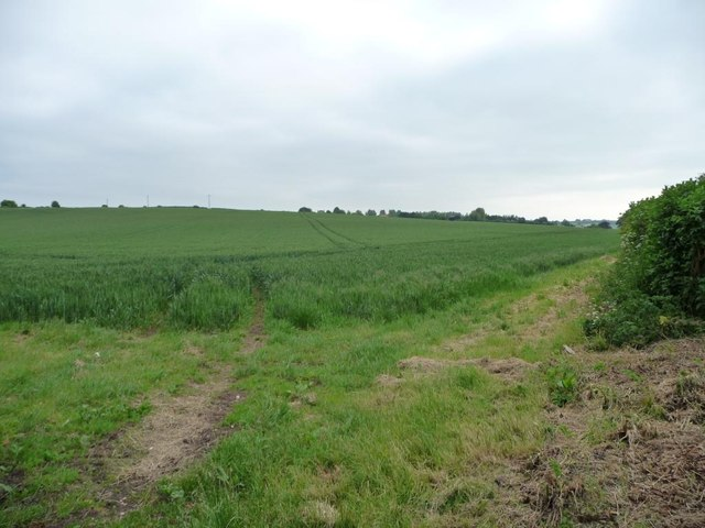 Corner of a cereal field, south of Crawley