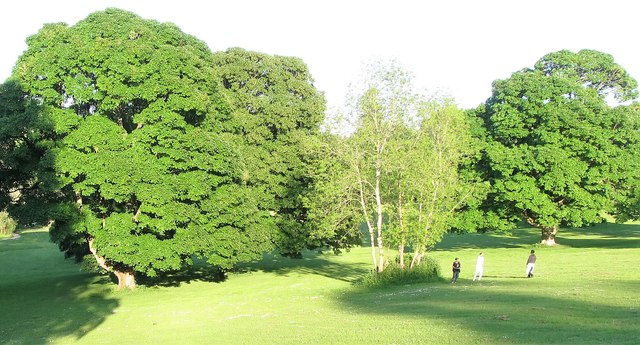 Parkland in the Palace Demesne, Armagh
