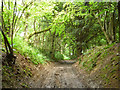 TQ8555 : Public byway up North Downs by Robin Webster