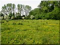 TR2357 : Path across field of buttercups by Peter Holmes