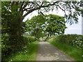 NY9875 : Minor road, Hallington by Richard Webb
