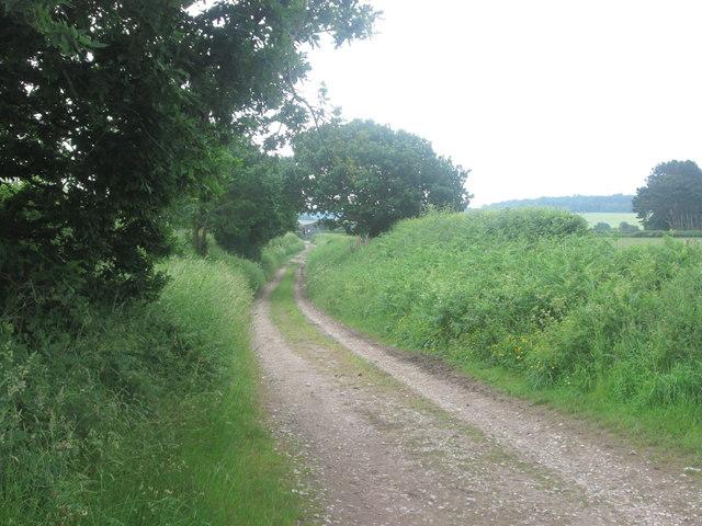Woodfall Lane towards Hilltop Farm