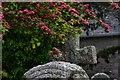 SW8235 : Mylor: The St. Mylor churchyard robin by Michael Garlick