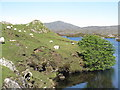 NG0887 : Sheep grazing by Loch Huamnabhat by M J Richardson