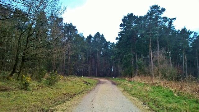 Woods at Far Top