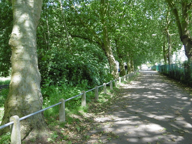 Avenue of trees in Barking Park