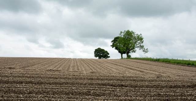 Field on south side of Painsthorpe Lane