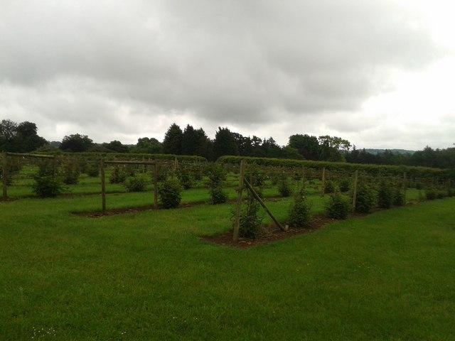 Soft fruit plantation