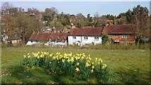 SU9948 : Cottages near St Catherine's Chapel by Mark Percy