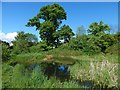 NS3978 : Pond beside Strathleven House by Lairich Rig
