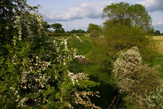 Valley full of blossom from the canal towpath, Cox Bank