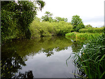 SU9890 : Pond, Layter's Green by Robin Webster