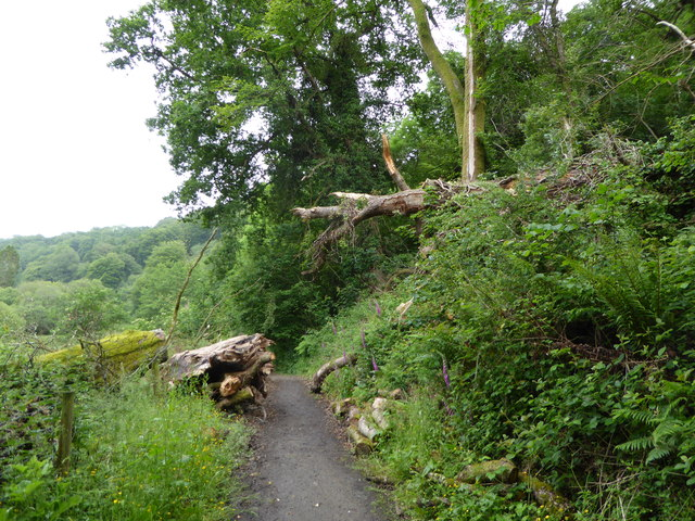 Path in Parke Country Park